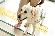 Go Guide Dogs PROJECT 補助犬の育成とユーザーを応援!